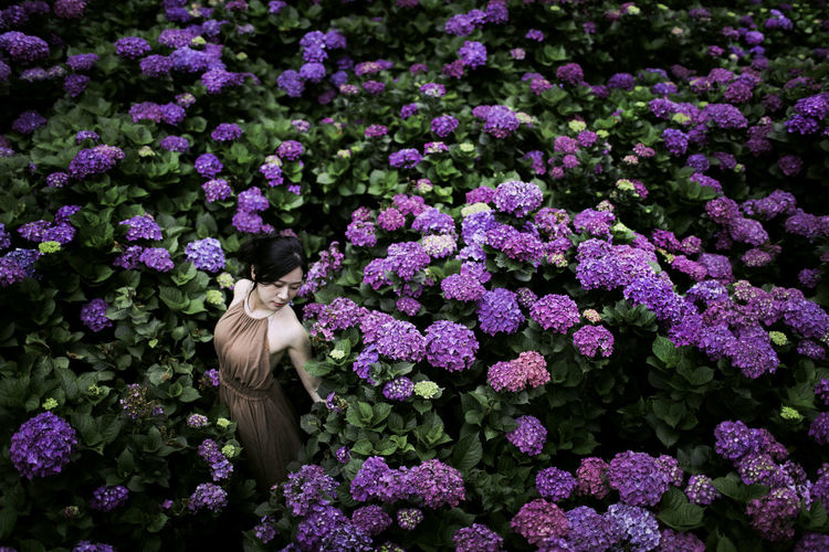 High angle view of woman standing by flowering plants