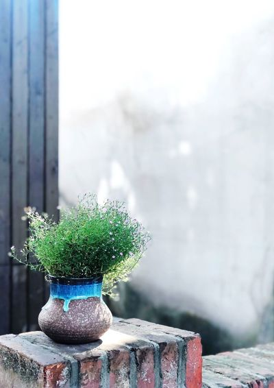 Nature Day No People Potted Plant Focus On Foreground Plant Green Color Window Growth Architecture Outdoors Wall - Building Feature Table Built Structure Glass - Material Houseplant Close-up Decoration