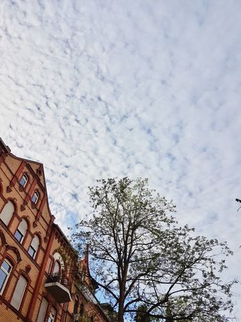 Low Angle View Sky Cloud - Sky Built Structure Day Outdoors Architecture Building Exterior No People Cloud Wiesbaden, Germany Germany 🇩🇪 Deutschland Architecture Low Angle View Tree History Trees