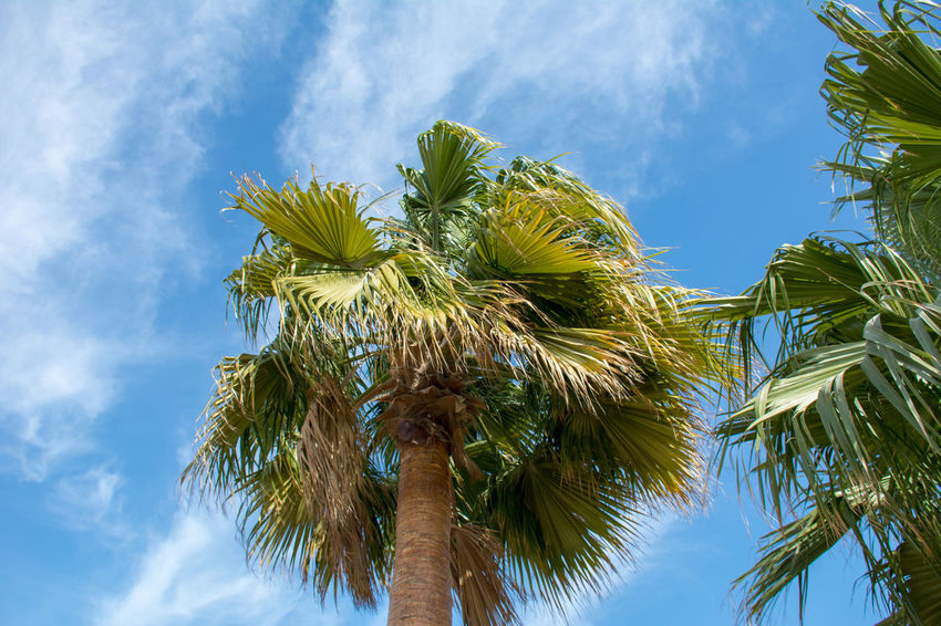 Captured by Beautiful Trees And Flowers Are In The Garden Beauty In Nature Blue Close-up Cloud - Sky Day Green Color Growth Low Angle View Nature No People Outdoors Palm Tree Sky Tree