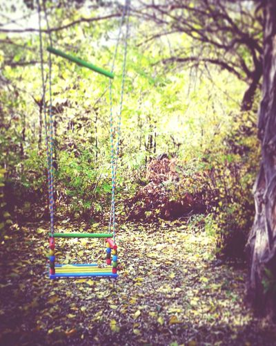 Tree Nature Swing Tranquility Beauty In Nature Green Color Autumn Colors Autumn No People