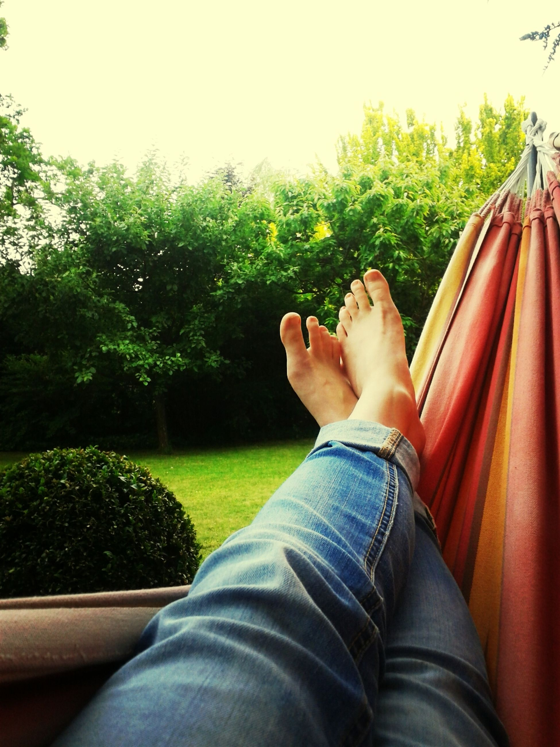 low section, person, personal perspective, relaxation, lifestyles, tree, legs crossed at ankle, leisure activity, sitting, resting, jeans, relaxing, green color, barefoot, human foot, growth, plant