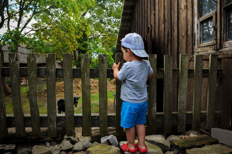 Animals Attentive Boys Built Structure Careful Childhood Corral Day Daydreaming Goat Life Lifestyles Nice Old House Outdoors Paddock Palisade Rear View Standing Summer Tree Watch Wood Showcase April