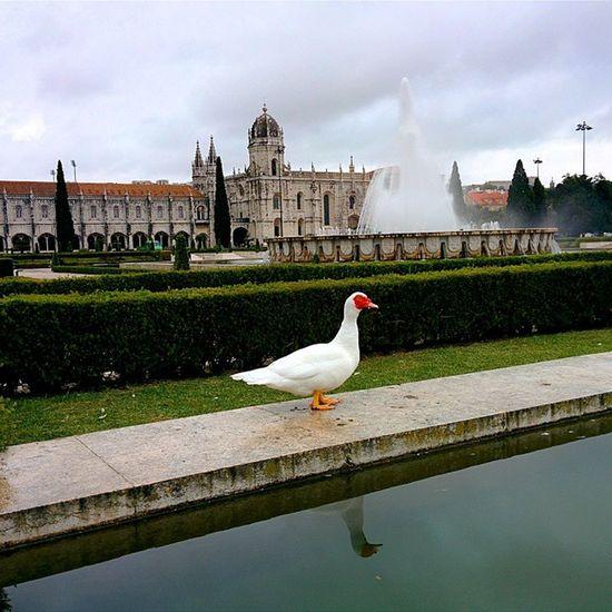 Turist In Belém Lisboa Lisbon Portugal Holidays