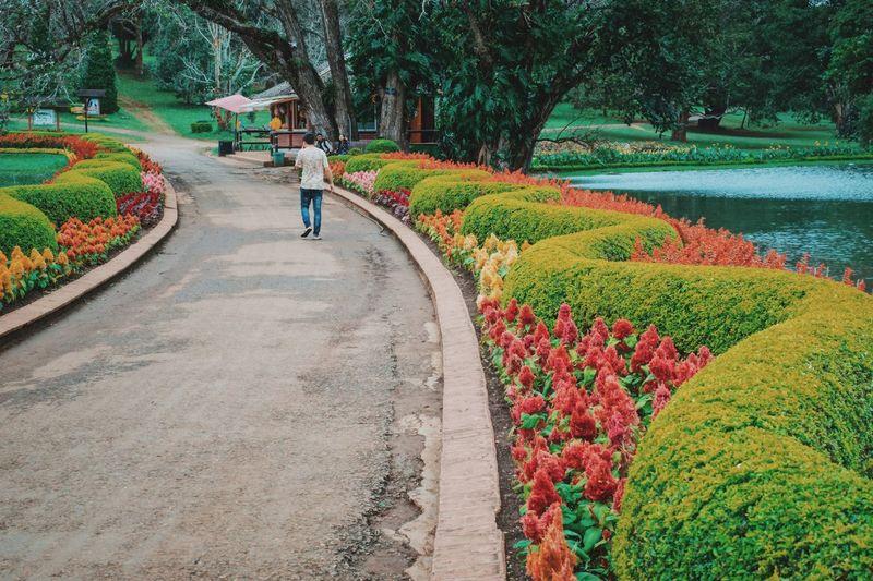 Man walking amidst by flowering plants in park