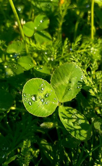 Nature Leaf Green Color Plant Growth Water Drop Beauty In Nature No People Outdoors Close-up Day Freshness Fragility Beauty In Nature Biology Tree Nature Green Color Small Business Heroes