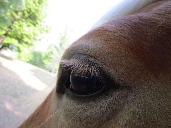 Horseeye Animal