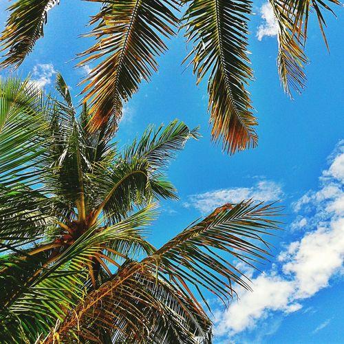 Langkawi Island Life Coconut Trees Happyholidays