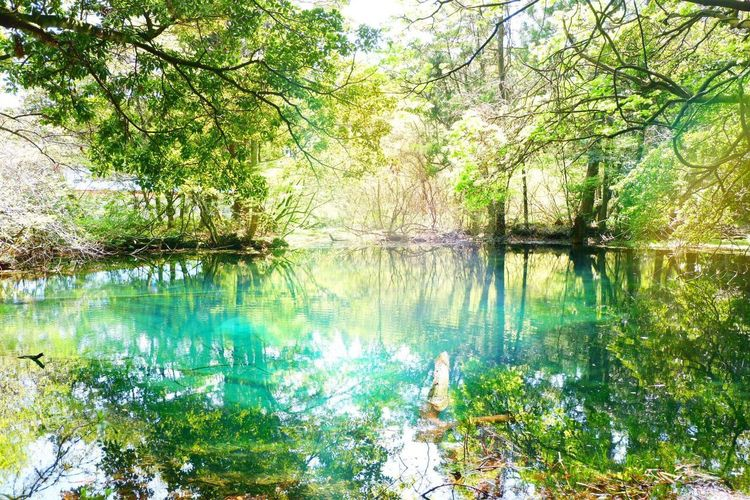 Water Nature Beauty In Nature Tree Reflection Tranquil Scene Outdoors Green Color Forest Japan Yamaga Maruikesama Maruike