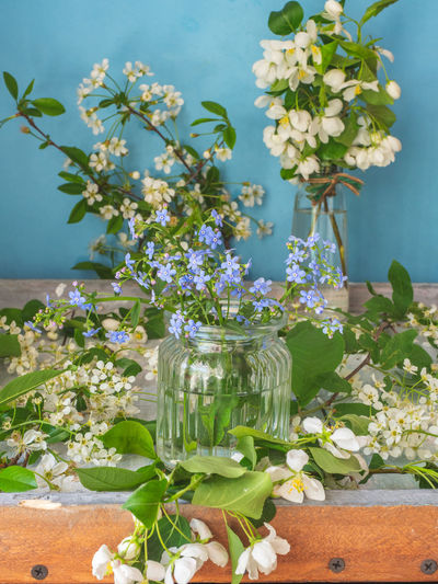 Close-up of white flowering plant in vase on table