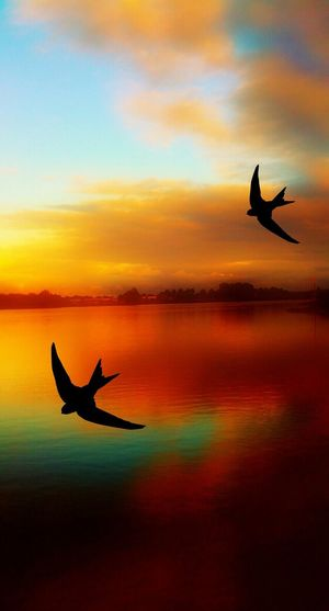 Silhouette birds flying above river against romantic sky at sunset