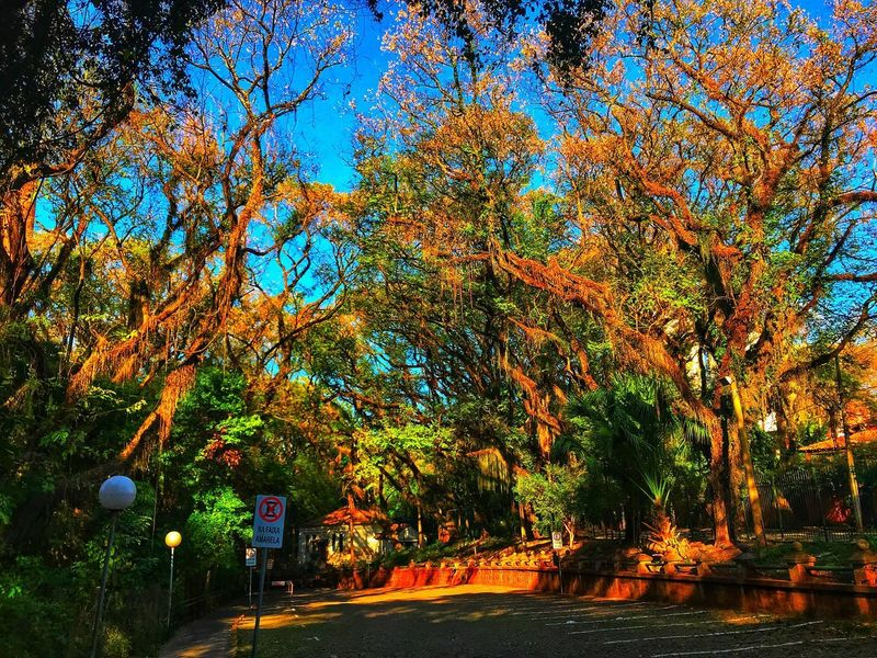 Piracicaba,SP-Brasil Tree Plant No People Nature Illuminated Growth Beauty In Nature