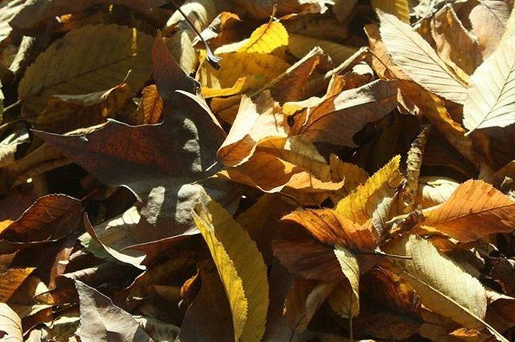 29november Autumn Autunno  Foglie Fogliesecche Instantnature