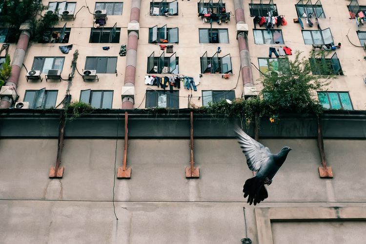 Low angle view of pigeon flying against building