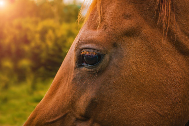 Close up of an Arabian horse eye Horse One Animal Animal Themes Mammal Animal Wildlife Livestock Animal Animal Body Part Brown Domestic Domestic Animals Close-up Vertebrate Pets Animal Head  Eye Animal Eye Focus On Foreground Herbivorous No People Outdoors Profile View Horseeye Horse Photography