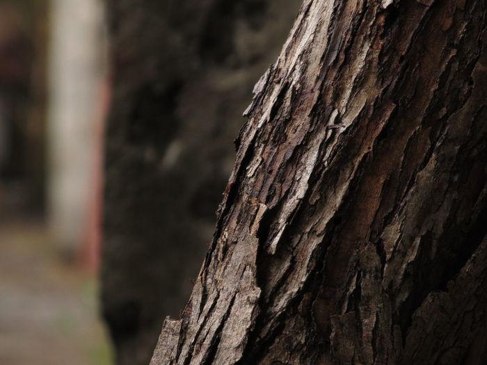 Texturas Tree Tree Trunk Tree Stump Wood - Material Textured  Tree Ring Close-up