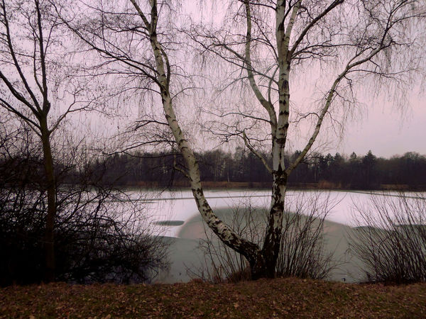 Tranquility For My Friends 😍😘🎁 Frozen Lake Beauty In Winter😍 Cold Outside ❄⛄  Enjoy The Little Things Beauty In Nature Brrrrrrrrr❄❄❄❄ Bare Tree Tranquil Scene Lake