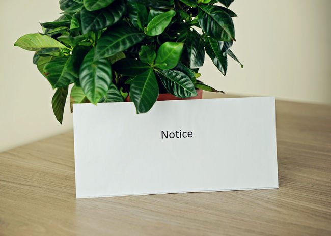 Copy Space Office RENT Bank Close-up Document Green Color House Indoors  Leaf Lease Message Nature No People Notice Notification Papper Plant Table Text