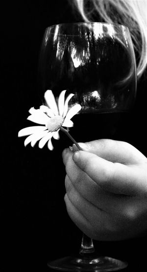 Beauty In Nature Black Background Blackandwhite Close-up Day Flower Flower Head Fragility Freshness Holding Human Body Part Human Hand Indoors  Lifestyles Nature One Person People Petal Real People Wineglass