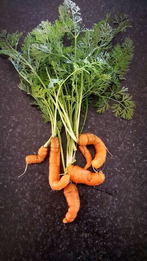 Funny little carrots Baby Carrots Funny Baby Carrots Carrots