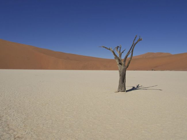 Dead Vlei, Namibia Africa Arid Climate Bare Tree Beauty In Nature Blue Clear Sky Dead Plant Desert EyeEm Nature Lover Landscape Minimal Minimalism Minimalobsession Namibia Nature Nature_collection No People Sossusvlei Sand Sand Dune Scenics Simplicity Tranquil Scene Travel Photography Tree