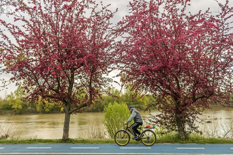 Man riding bicycle by river against trees