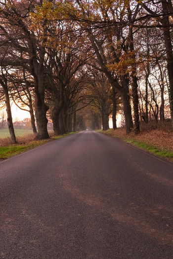 Tree The Way Forward Plant Direction Road Transportation Beauty In Nature Diminishing Perspective Tranquility Nature No People Growth Day Tranquil Scene vanishing point Scenics - Nature Empty Road Land Autumn Outdoors Treelined Change