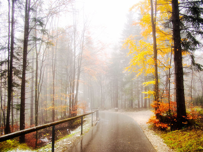 Autumn Bare Tree Beauty In Nature Branch Change Cold Temperature Day Fog Forest Landscape Leaf Nature No People Outdoors Road Scenics Single Lane Road The Way Forward Tranquil Scene Tranquility Tree Tree Trunk Winter WoodLand Yellow