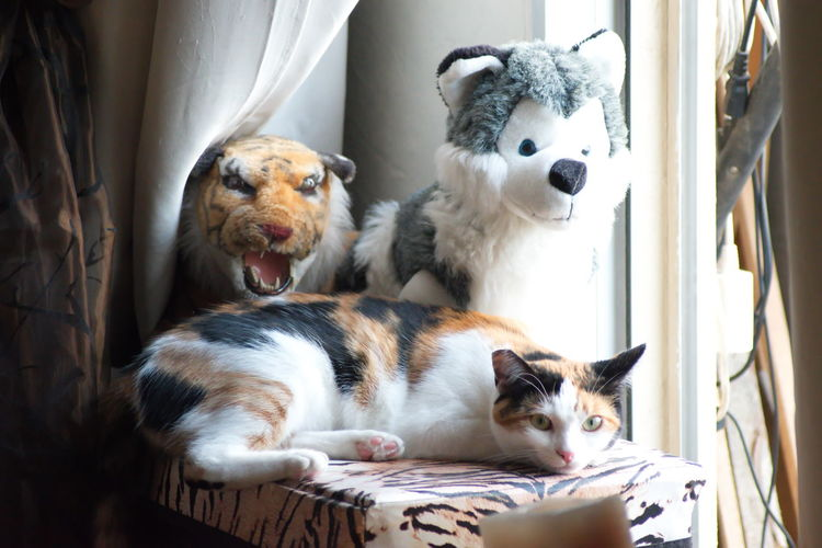 Pets Mammal