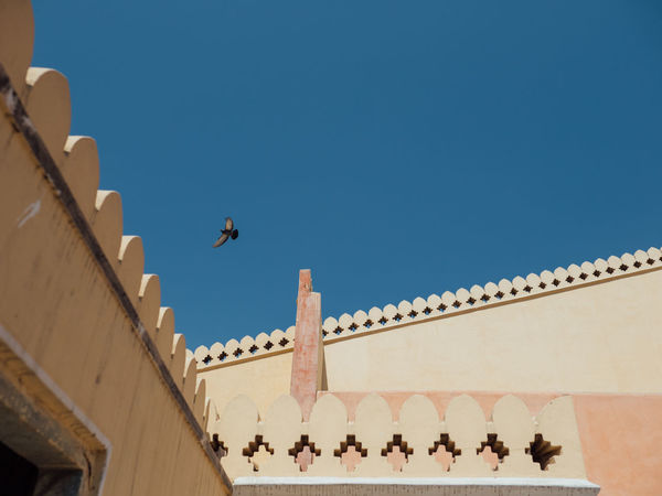 Sky Animal Themes Bird Animals In The Wild Animal Nature Animal Wildlife Clear Sky Sunlight Blue No People Flying Flying High Flying Bird Flying In The Sky Minimalism Soaring Soaring Up Above India Hawa Mahal Lines Light And Shadow Beautiful Day Jaipur Incredible India