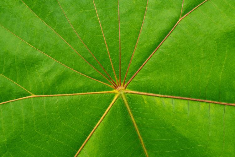 Directly below shot of green leaf