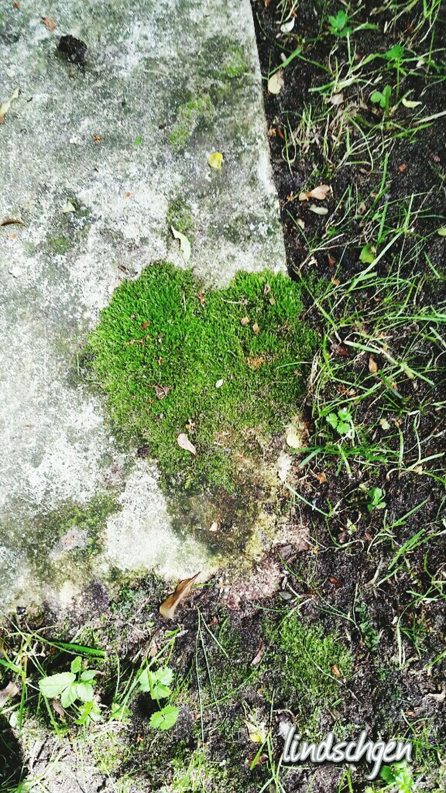 growth, green color, high angle view, plant, moss, nature, green, tree trunk, day, growing, outdoors, tranquility, beauty in nature, fragility, full frame, botany, overhead view, scenics, no people, tranquil scene, freshness