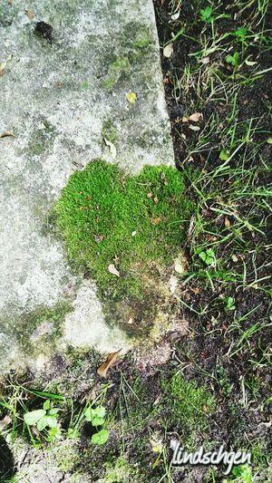 love is all around 💞 EyeEm Best Shots Gartenglück EyeEmBestPics Enjoying Life Glücklich ☺️ Nature Blütentraum EyeEm Best Shots - Nature Beautiful Nature EyeEm Nature Lover Love ♥ Liebe ❤ Liebe Love Moss
