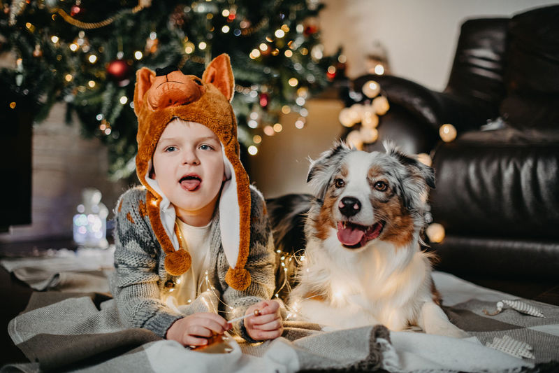 Dogs sitting on christmas tree at home