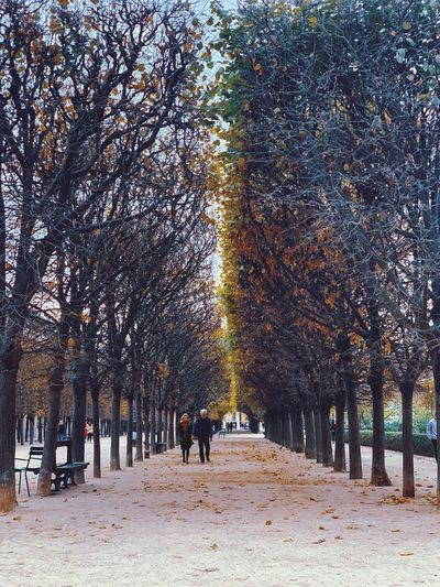 Rear view of people walking on footpath during autumn