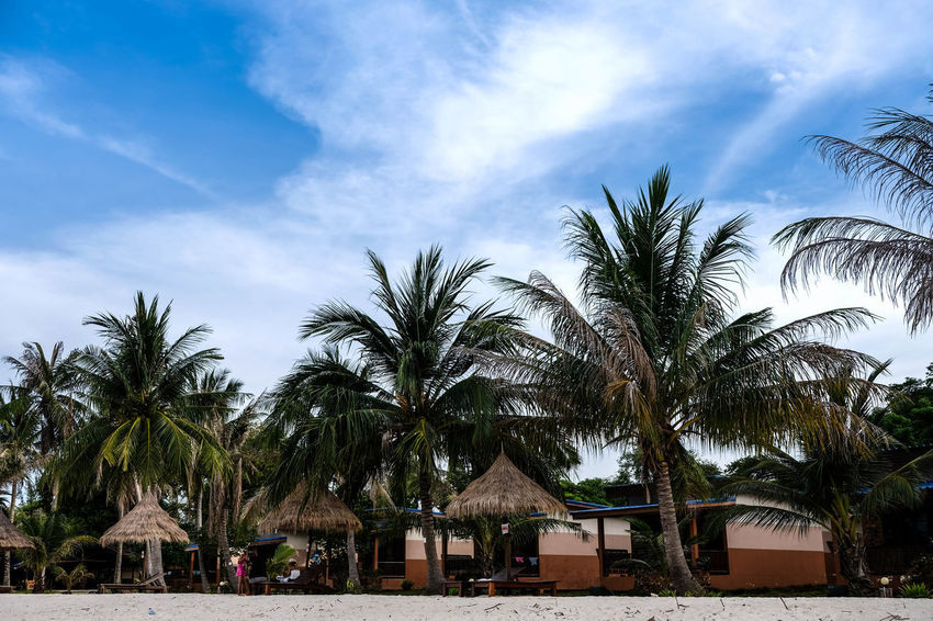 A pair of beach chair with umbrella and palm trees in row on the beach, blue sky in the back Sunny Thailand Building Exterior Cloud - Sky Day Nature Outdoors Palm Tree Paradise Resort Scenics Sky Summer Tree