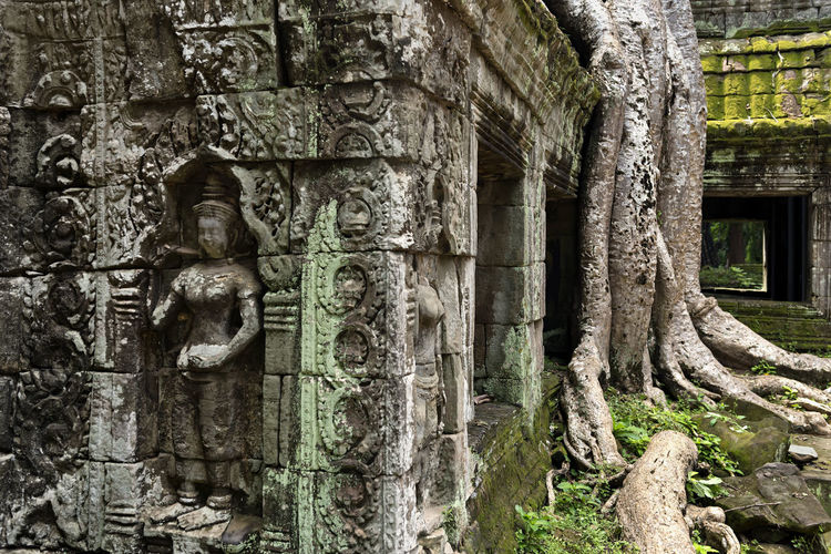 Ta Prohm Religion Spirituality History Ta Prohm ASIA Cambodia Siem Reap Angkor Land Travel Destinations Vacations Holiday UNESCO World Heritage Site Buddhist Temple Buddhism Beautiful Archaeology Tree Tourism Ancient Civilization Cultures Ruins Heritage Travel Photography Temple