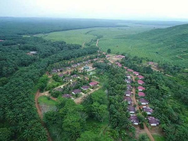 Villages Replanting Green INDONESIA Village Sawit Kebun Sawit Shades Of Winter EyeEmNewHere