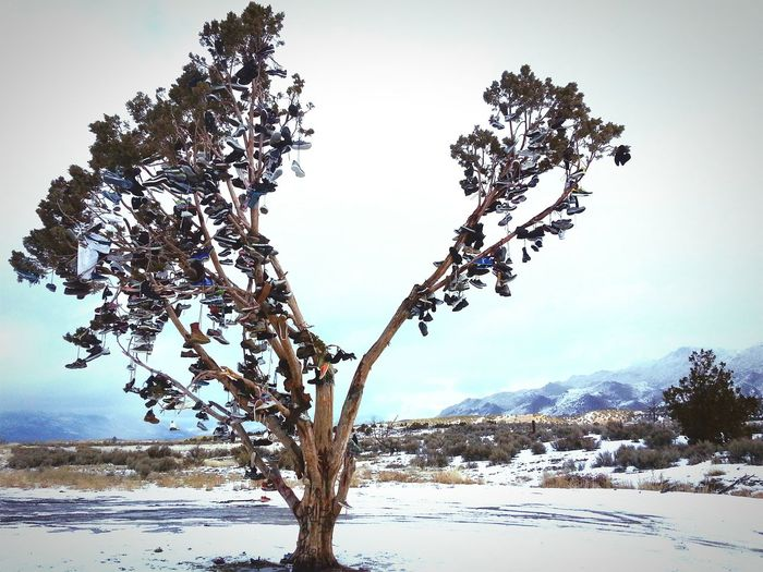 The tree of souls. NE California. Treedom ShoeTinsel  Reno Hwy395 First Eyeem Photo