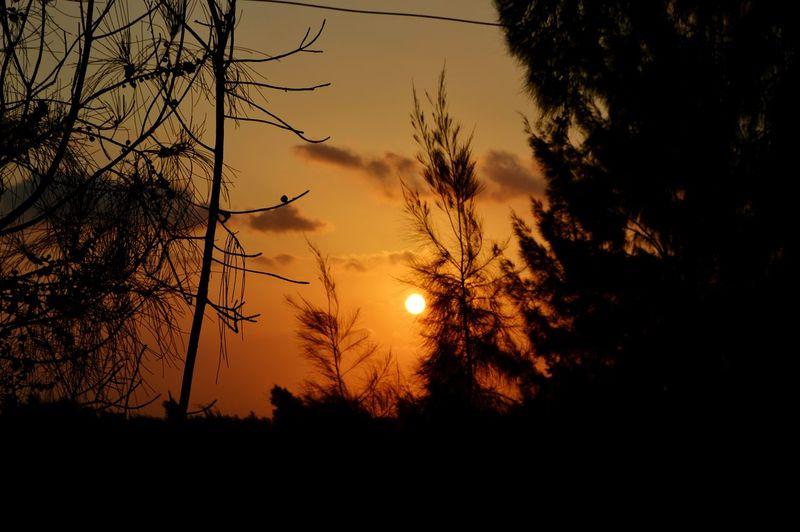 Sundown, Nightfall, Close Of Day, Twilight, Dusk, EveningTree ❤ Tb