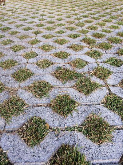 Blog Blogs Field Fields Of Green