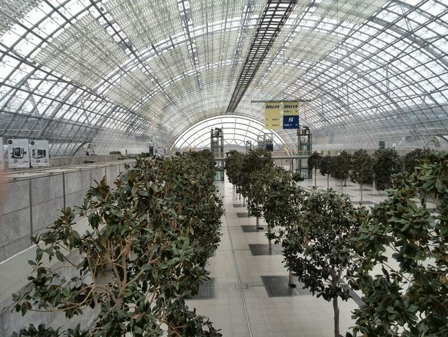 Tree No People Leipzig Messe Leipzig Messe Plant Indoors  Hall
