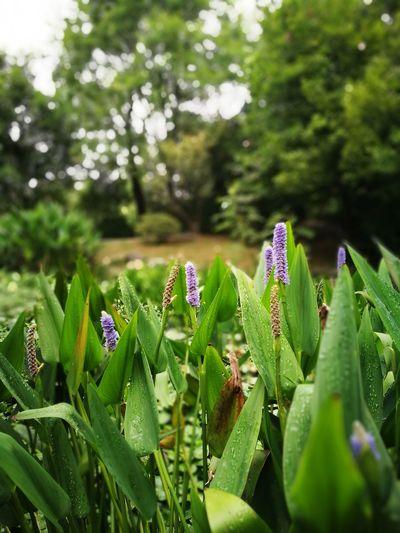雨胡湖 公园,最靠近八仙桥附近,是儿时觉得园中最静美的地方。