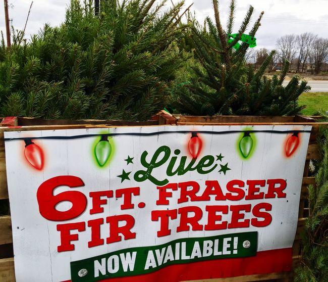 Christmas Tree Trees Winter Trees Sign Christmas Lights Christmas Is Coming No Snow  December Michigan Winter Wonderland Pure Michigan United States