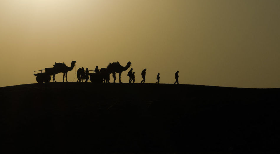 Silhouette people and camels on desert against sky during sunset