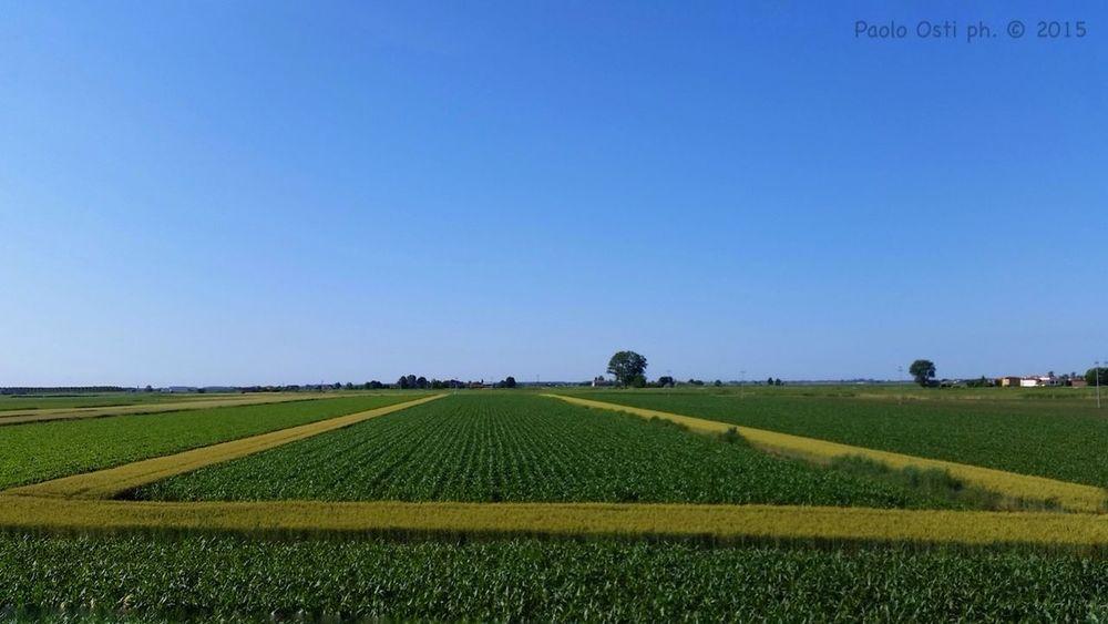 Coltivazioni geometriche Polesine Agricoltura Campi Verde Azzurro Landscape Landscape_Collection Panorama Veneto Italy