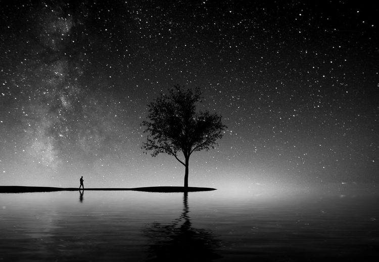 Silhouette Tree And Lake Against Sky At Night