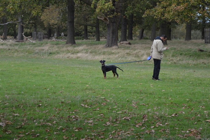 Dog In Nature Dogs Best Friend Man With A Phone Mans Best Friend Mobile Conversations Mobile Conversations