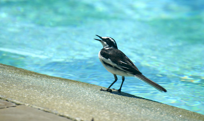 Bird perching on water