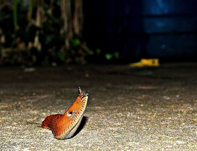 Snail Schnecke Nature Macro